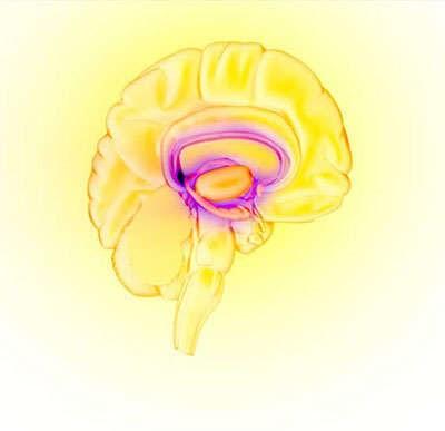 Image by NIDA - The brain's reward circuit